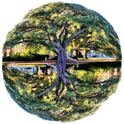 theworldneedstrees.jpg